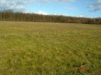 Nyírád eladó mezõgazdasági terület 57 hektár 50 hektár erdõ 7 sport ingatlan hirdetéshez feltöltött kép